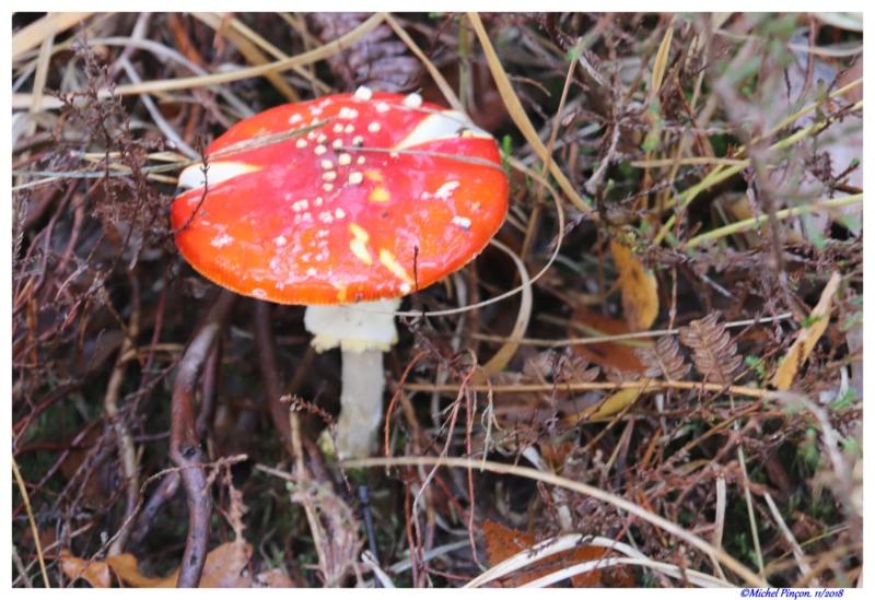 [fil ouvert] les champignons - Page 11 Dsc01934