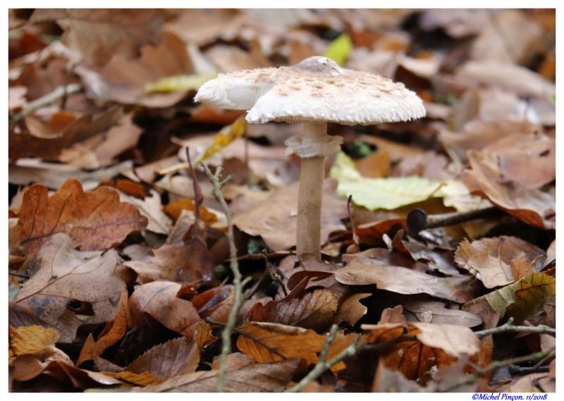 [fil ouvert] les champignons - Page 11 Dsc01935