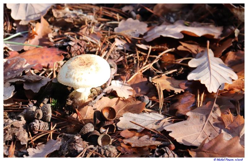 [fil ouvert] les champignons - Page 11 Dsc01942