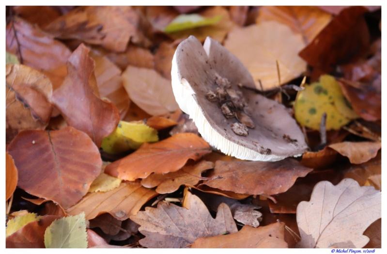 [fil ouvert] les champignons - Page 11 Dsc01943