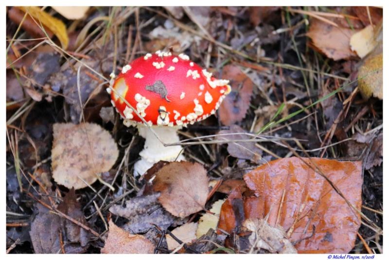 [fil ouvert] les champignons - Page 11 Dsc01944