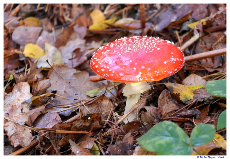 [fil ouvert] les champignons - Page 11 Dsc01947