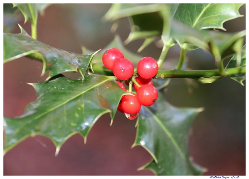 [Fil ouvert] Fruit sur l'arbre - Page 11 Dsc01968