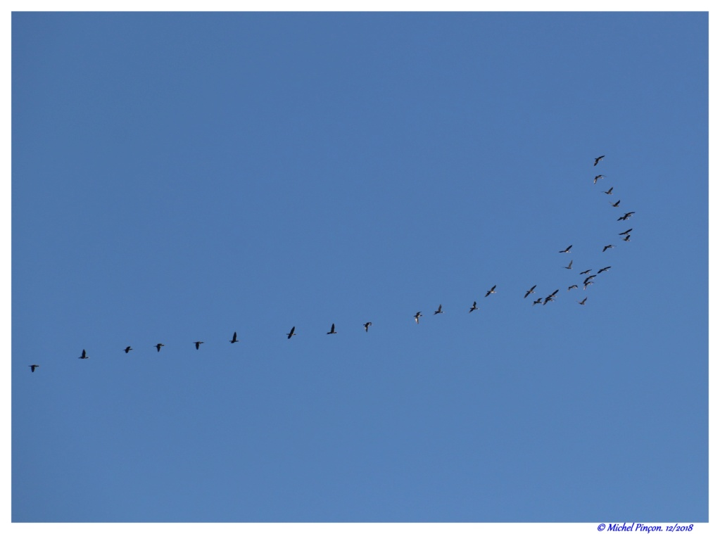 [Ouvert] FIL - Oiseaux. - Page 19 Dsc02028