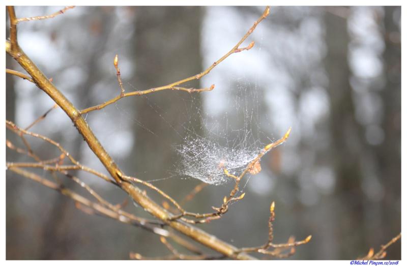 [Fil ouvert] Toile d'araignée Dsc02060