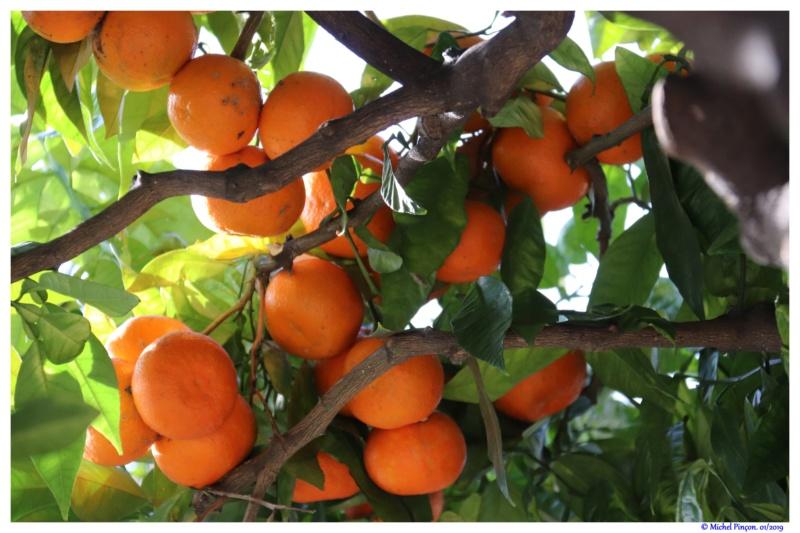 [Fil ouvert] Fruit sur l'arbre - Page 12 Dsc02171