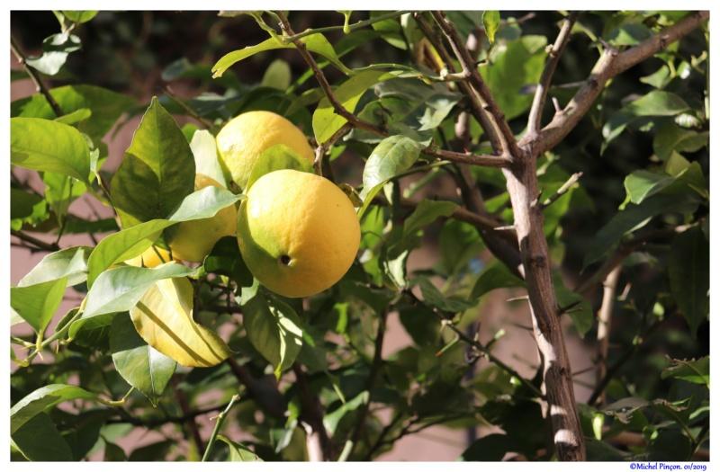 [Fil ouvert] Fruit sur l'arbre - Page 12 Dsc02172