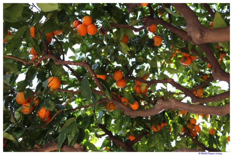 [Fil ouvert] Fruit sur l'arbre - Page 12 Dsc02173