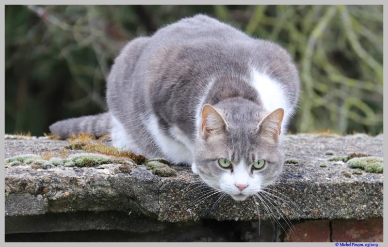 [fil ouvert] Les chats  - Page 9 Dsc02829