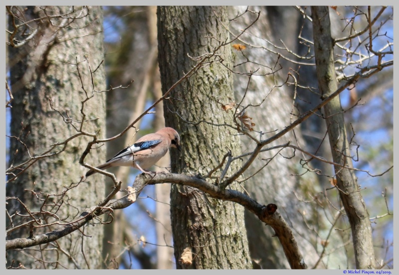 [Ouvert] FIL - Oiseaux. - Page 29 Dsc03053