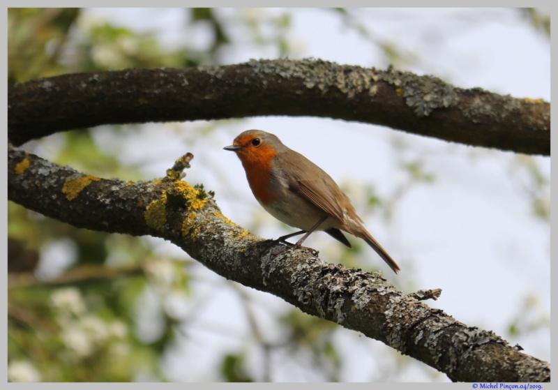 [Ouvert] FIL - Oiseaux. - Page 29 Dsc03054