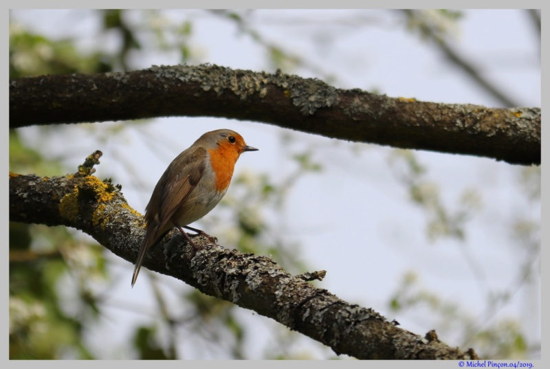 [Ouvert] FIL - Oiseaux. - Page 29 Dsc03055