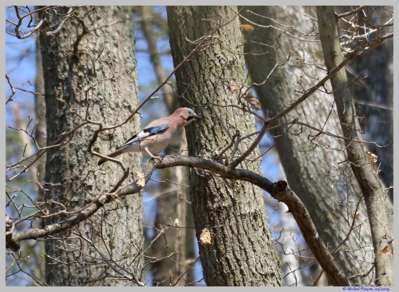 [Ouvert] FIL - Oiseaux. - Page 29 Dsc03056