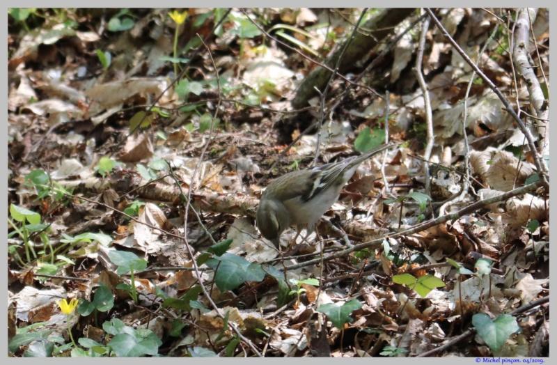 [Ouvert] FIL - Oiseaux. - Page 29 Dsc03057