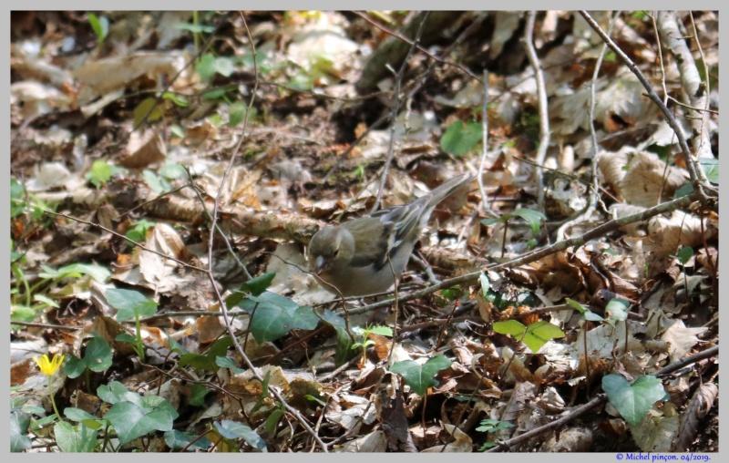 [Ouvert] FIL - Oiseaux. - Page 29 Dsc03058