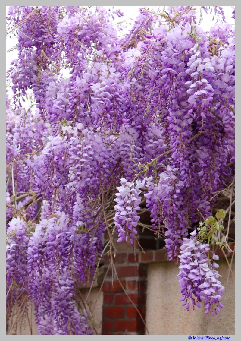 [Fil ouvert] Fleurs et plantes - Page 14 Dsc03138