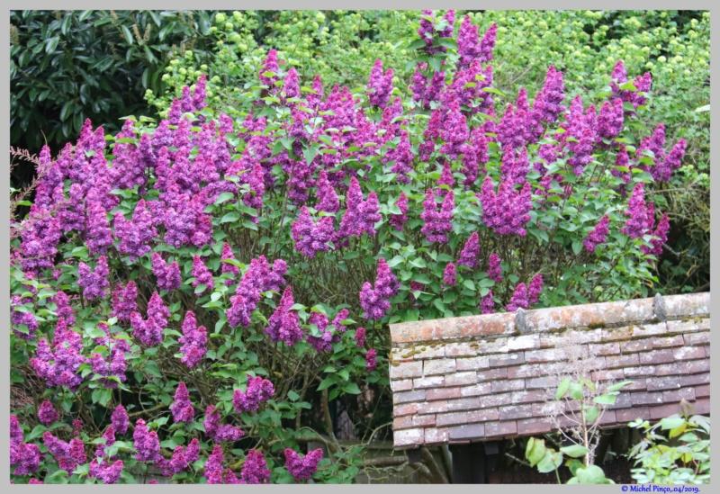 [Fil ouvert] Fleurs et plantes - Page 14 Dsc03139
