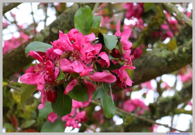 [Fil ouvert] Fleurs et plantes - Page 14 Dsc03149