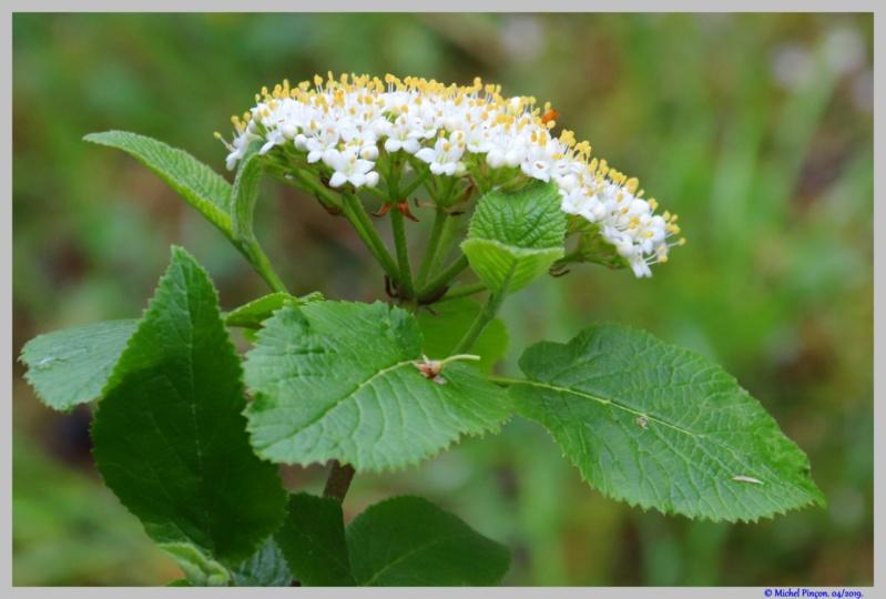[Fil ouvert] Fleurs et plantes - Page 14 Dsc03164