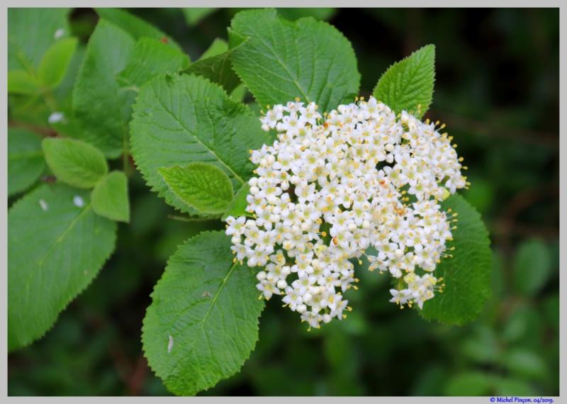 [Fil ouvert] Fleurs et plantes - Page 14 Dsc03165