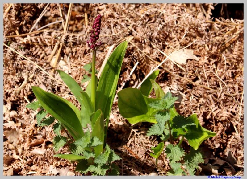 [Fil ouvert] Fleurs et plantes - Page 14 Dsc03166