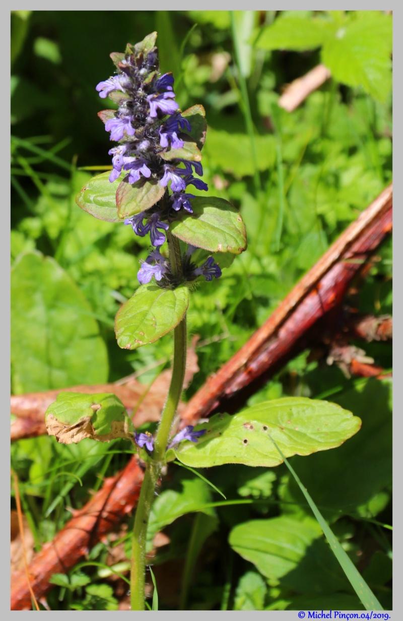 [Fil ouvert] Fleurs et plantes - Page 14 Dsc03167
