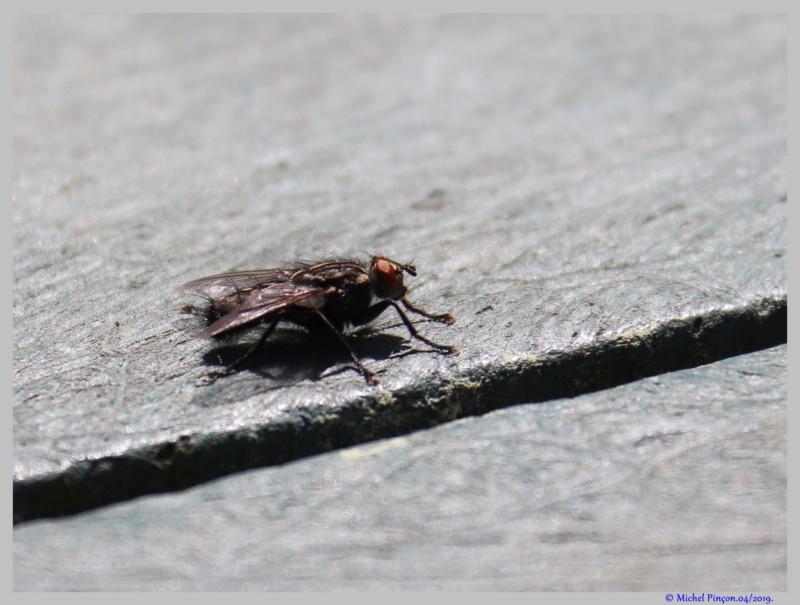 Insectes et Proxi. [Fil Ouvert] - Page 16 Dsc03193