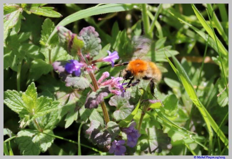 Insectes et Proxi. [Fil Ouvert] - Page 16 Dsc03195