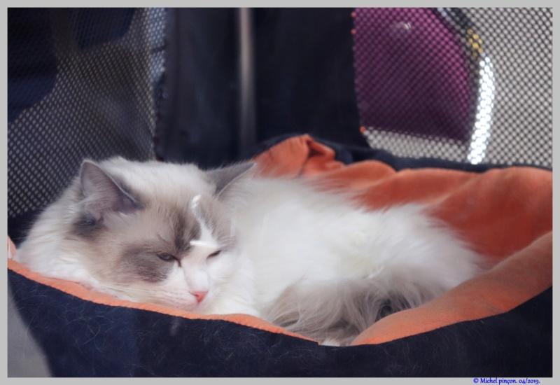 [fil ouvert] Les chats  - Page 9 Dsc03231