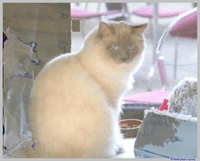 [fil ouvert] Les chats  - Page 9 Dsc03232