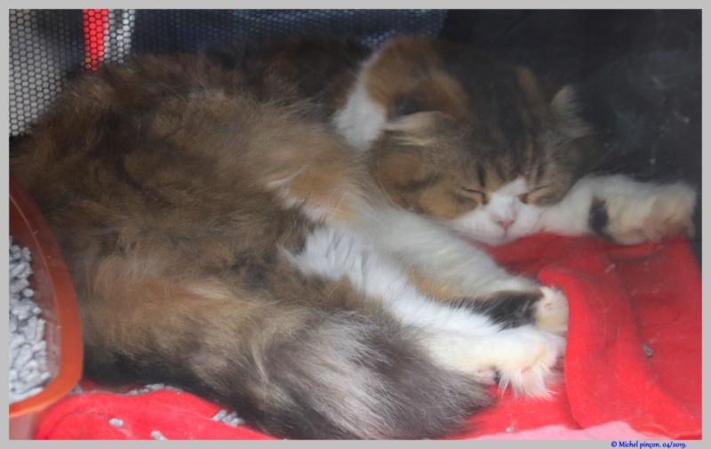 [fil ouvert] Les chats  - Page 9 Dsc03234