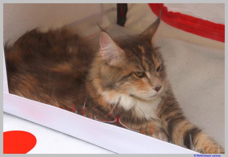 [fil ouvert] Les chats  - Page 9 Dsc03241