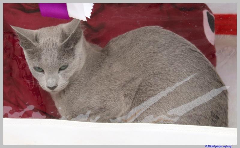 [fil ouvert] Les chats  - Page 9 Dsc03242