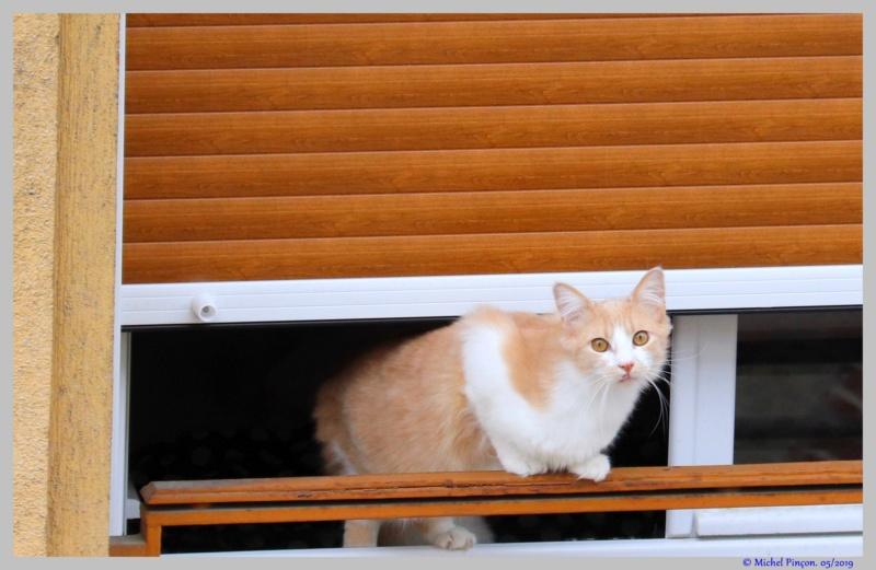 [fil ouvert] Les chats  - Page 9 Dsc03256