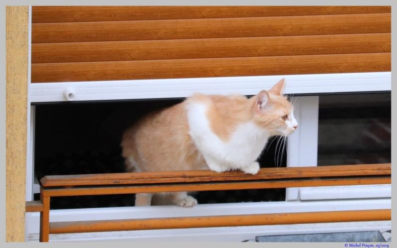 [fil ouvert] Les chats  - Page 9 Dsc03257