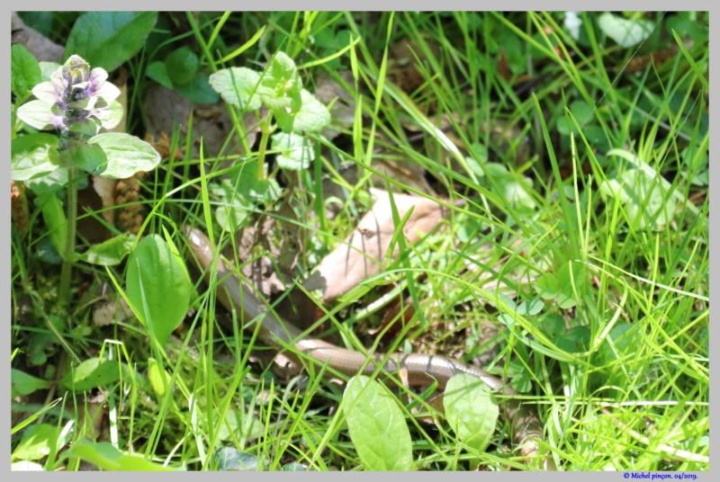 [Fil ouvert à tous] Reptiles, serpents, tortues, amphibiens, ... - Page 10 Dsc03260