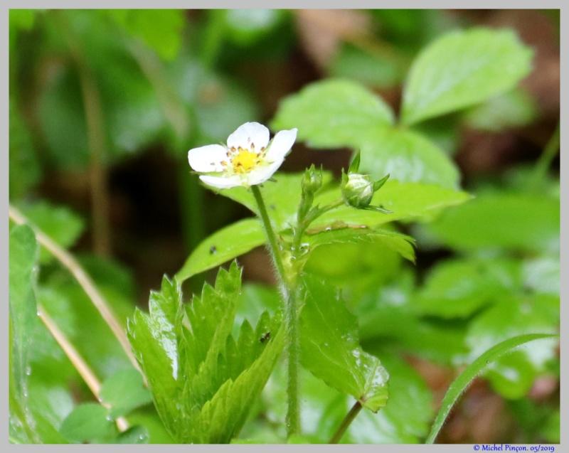 [Fil ouvert] Fleurs et plantes - Page 15 Dsc03261