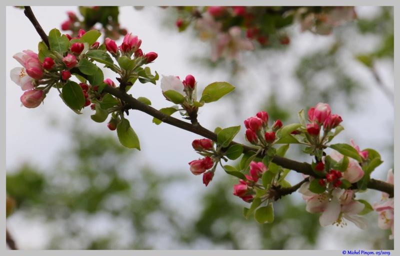 [Fil ouvert] Fleurs et plantes - Page 15 Dsc03263