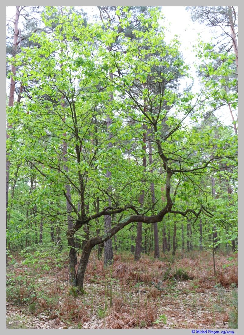 [fil ouvert] la forêt dans tous ses états - Page 25 Dsc03333