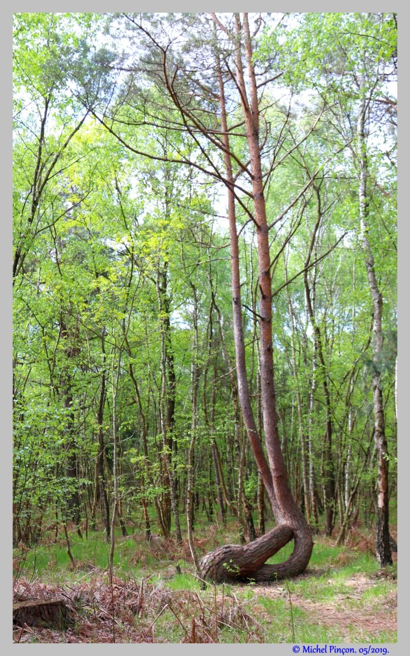 [fil ouvert] la forêt dans tous ses états - Page 25 Dsc03334