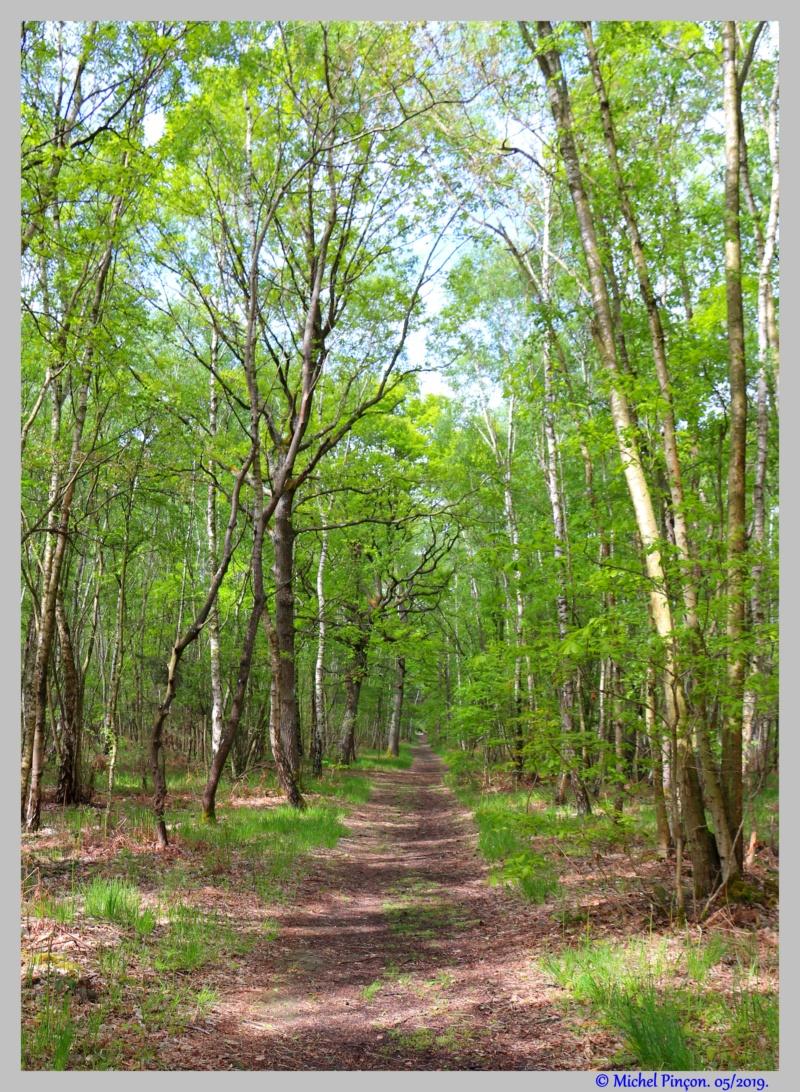 [fil ouvert] la forêt dans tous ses états - Page 25 Dsc03335
