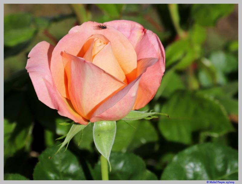 [Fil ouvert] Fleurs et plantes - Page 15 Dsc03343