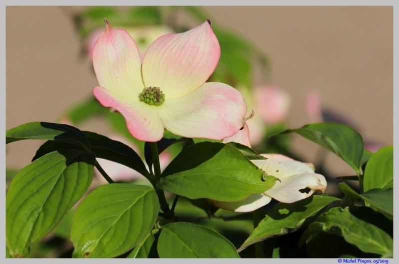 [Fil ouvert] Fleurs et plantes - Page 15 Dsc03344