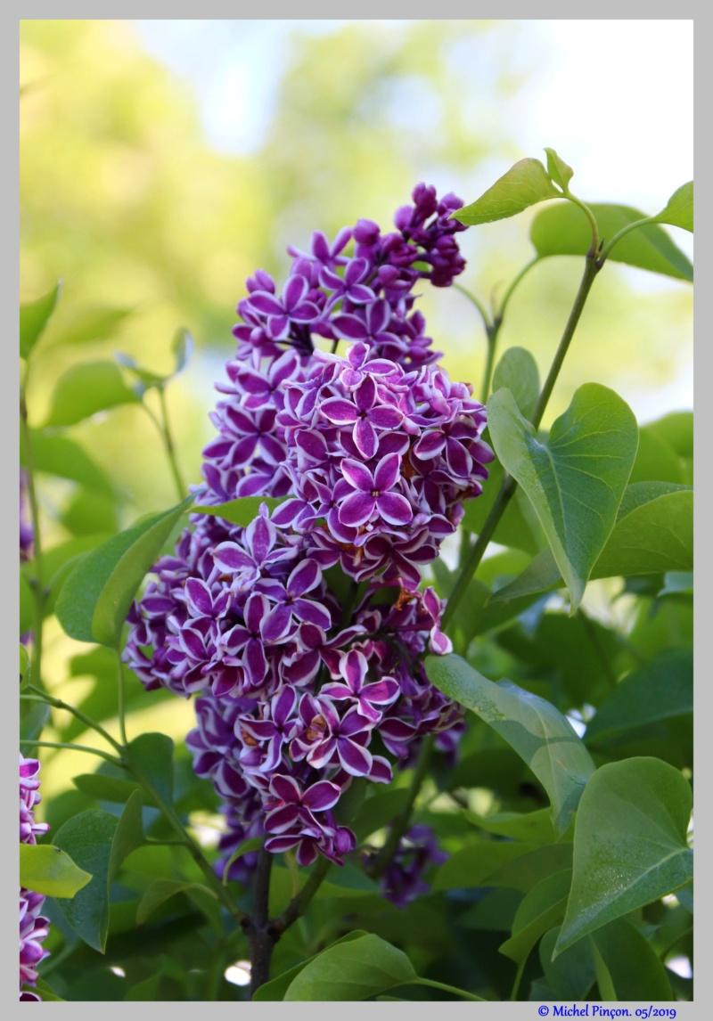 [Fil ouvert] Fleurs et plantes - Page 15 Dsc03345