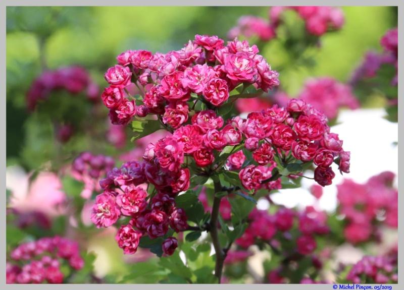 [Fil ouvert] Fleurs et plantes - Page 15 Dsc03348