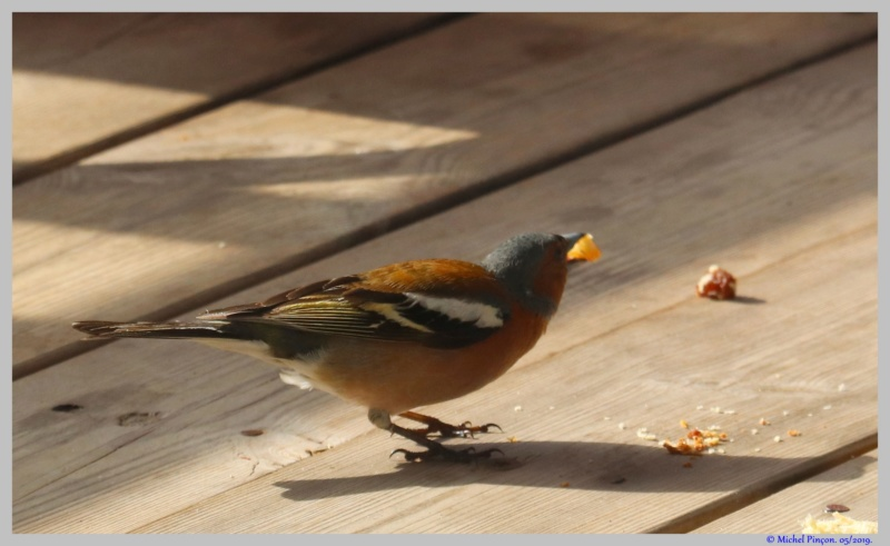 [Ouvert] FIL - Oiseaux. - Page 32 Dsc03464