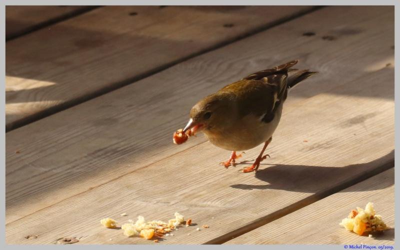 [Ouvert] FIL - Oiseaux. - Page 32 Dsc03465