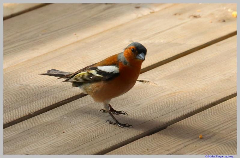 [Ouvert] FIL - Oiseaux. - Page 32 Dsc03467