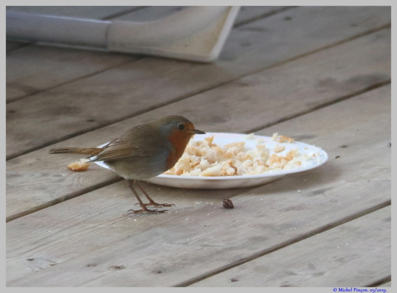 [Ouvert] FIL - Oiseaux. - Page 32 Dsc03468