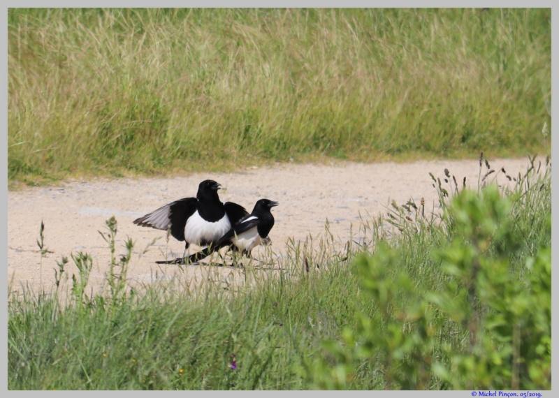[Ouvert] FIL - Oiseaux. - Page 32 Dsc03469